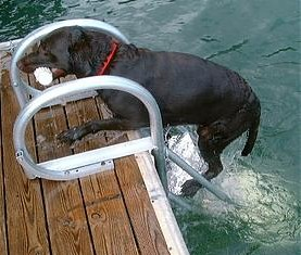 dog climbing aqua stairs to get on the dock