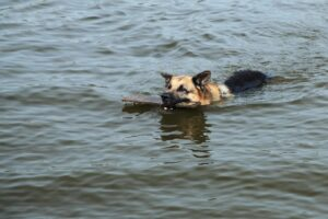 dog deep in the water being safe