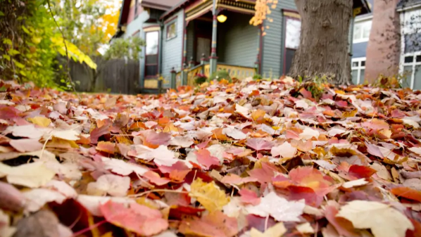 Fallen leaves in front of home during fall | Lake Homes Realty