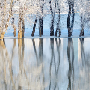 winter trees on the water