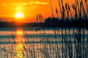 yellow and orange sun setting over the lake with reeds in foreground