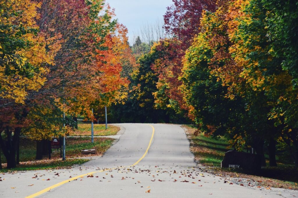 Autumnal road with colorful trees